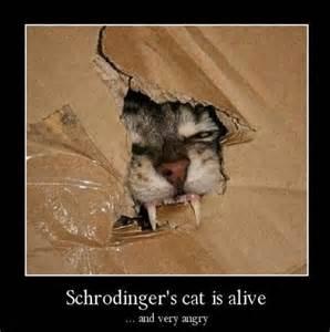 schrodinger s cat
