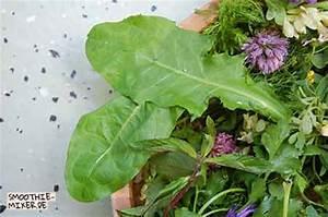 Pflanze Große Blätter : welche wildkr uter eignen sich f r gr ne smoothies smoothie ~ Avissmed.com Haus und Dekorationen