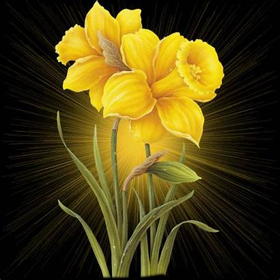 Yellow Flowers Flower Rose Gifs Background Animated