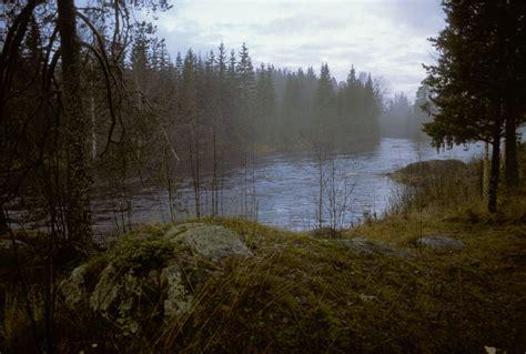 bosque de suecia