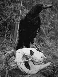 11 Best Raven Skull images | Raven skull, Skull, Raven