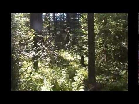 survival shelter secret hideoutwmv youtube