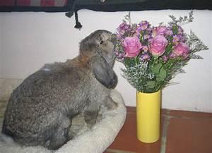 Plante Oreille De Lapin : liste des plantes toxiques pour nos lapins de compagnie animogen ~ Melissatoandfro.com Idées de Décoration