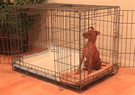 medium puppy apartment monthly payments