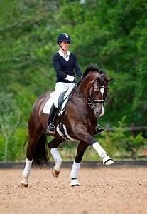 546 best Photo's, Horse, Dressage images on Pinterest ...