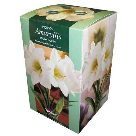 garden indoor bulb growing kits sale fast delivery