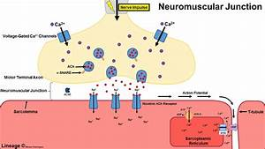 Lambert-eaton Syndrome - Neurology
