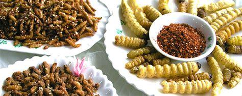 insectes cuisine des insectes dans nos assiettes info chalon l 39 actualité
