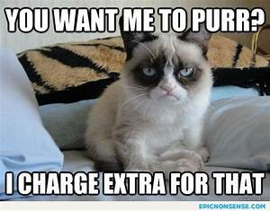 Top 49 Most Funniest Grumpy Cat Quotes | Just Laughs Fun ...