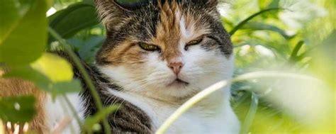 Giftige Zimmerpflanzen Für Katzen by Giftige Pflanzen F 252 R Katzen Mit Bildern Catplus De
