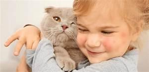 Katzenfloh Auf Mensch : sind katzenfl he gef hrlich f r den menschen tiermedizin ~ Watch28wear.com Haus und Dekorationen