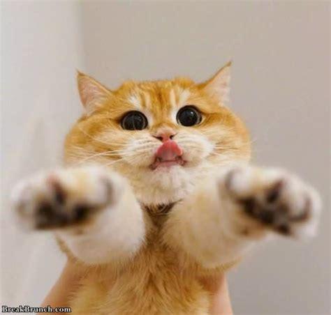 eyes cat cute huge breakbrunch