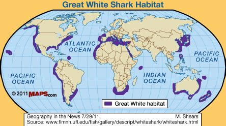 habitat and range great white shark