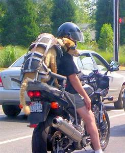 30 Most Amusing Motorcycle Pictures of the Week - Custom ...
