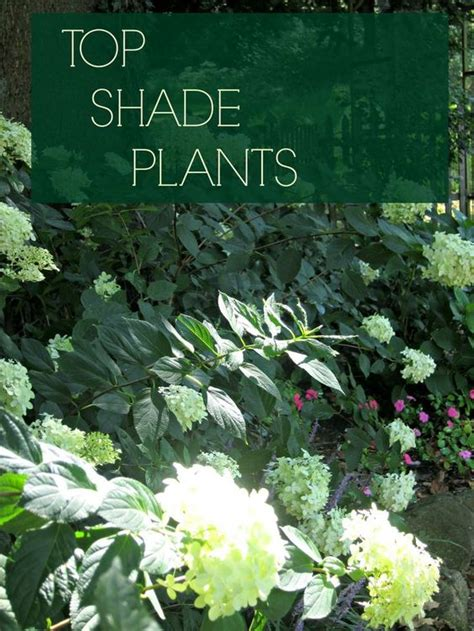 best plants and flowers for shade discover top shade perennials gardens shade plants and