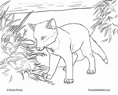 Coloring Fox Pages Animals Forest Pup Puppy