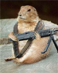Funny hamsters with guns |Funny Animal