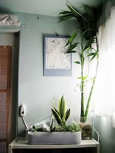 pflanzen im schlafzimmer es lohnt sich fur sicher With pflanzen schlafzimmer