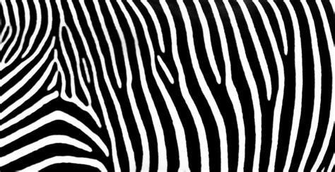 home design graph paper zebra stripes pattern stock image genstockphoto