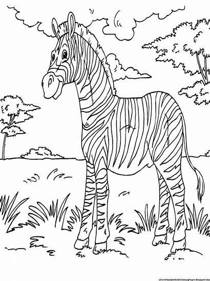 Zebra Coloring Pages Printable Kid Animal Sheets