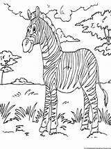 Zebra Coloring Pages Printable Kid Animal Sheets Zebras Activity Animals Books African Sheet Colouring Printables Boys Gorilla Bokito Zoo Paint sketch template