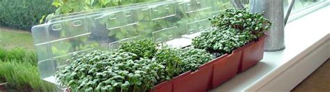 Window Sill Garden Vegetables by Window Sill Gardening From Suttons Seeds