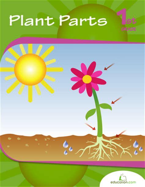 plant parts workbook educationcom