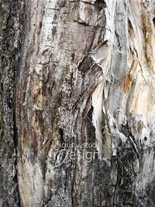 banque d39image texture de tronc d39arbre gruge par le With maison en tronc d arbre 12 larbre de jesse