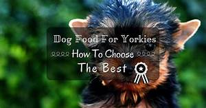 how to choose the best dog food for yorkies thinkofpuppy With best wet dog food for yorkies