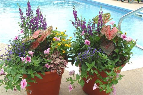 container flower gardening home landscaping