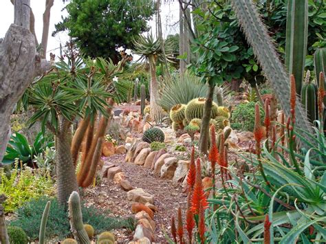 succulent gardens south africa find beautiful and hardy succulents for sale junk mail blog