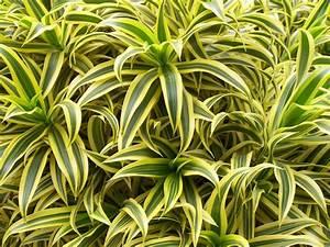 Plante Suspendue Intérieur : plante d polluante 10 plantes d polluantes pour votre int rieur ~ Teatrodelosmanantiales.com Idées de Décoration