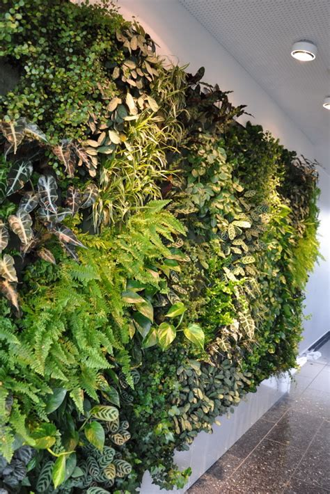 Vertikaler Garten Echte Pflanzen by Die Wand Ist Das Ziel Vertikale G 228 Rten Drinnen Und