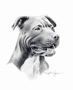 Dog Drawing Pitbull | Drawing ideas | Pinterest | Pitbull ...