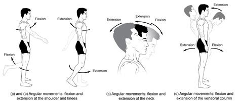 types of movements anatomy and physiology i