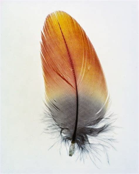 pin  littlezombie  inspiration   feather