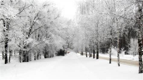 750x1334 beautiful snow green nature 193 rvores cobertas de neve hd imagenswiki