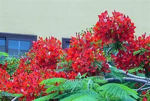 Rote Haselnuss Kaufen : soll ich eine mimose kaufen garten haus garten zenideen ~ Michelbontemps.com Haus und Dekorationen