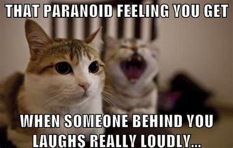 powerfully true  hysterical cat memes purrtacular