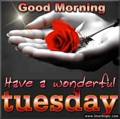 good morning   wonderful tuesday pictures