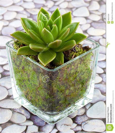 plante succulente d interieur l atelier des fleurs
