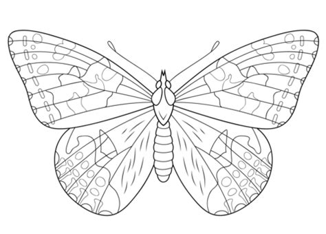 painted lady butterfly coloring page  printable
