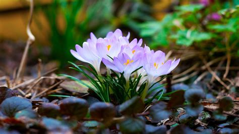 28+ Spring Wallpapers, Backgrounds, Images Freecreatives