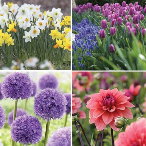 bloom time chart for and summer bulbs longfield