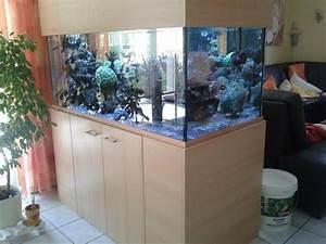 Aquarium Als Raumteiler : aquarium raumteiler neu und gebraucht kaufen bei ~ Michelbontemps.com Haus und Dekorationen
