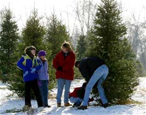 cut down your own christmas tree edmonton big tree plantation trees and landscape trees morrow ohio ne of cincinnati