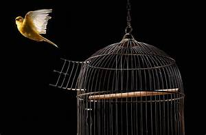 Tips for Maintaining a Clean Bird Cage
