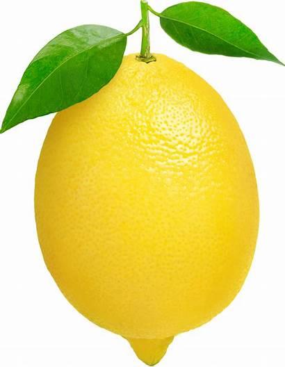 Lemon Fruit Clip Clipart Clipartion