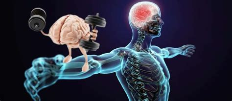 memory muscle bodybuilding importance its wizard anatomy