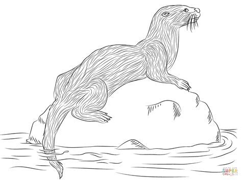 Otter Kleurplaat by River Otter Coloring Page Free Printable Coloring Pages